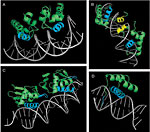 Introduction to Protein–DNA Interactions figure:4 thumbnail image