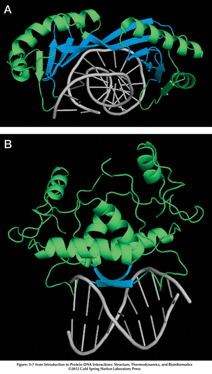 Introduction to Protein–DNA Interactions figure:4 image