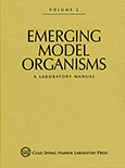 Emerging Model Organisms: A Laboratory Manual, Volume 2